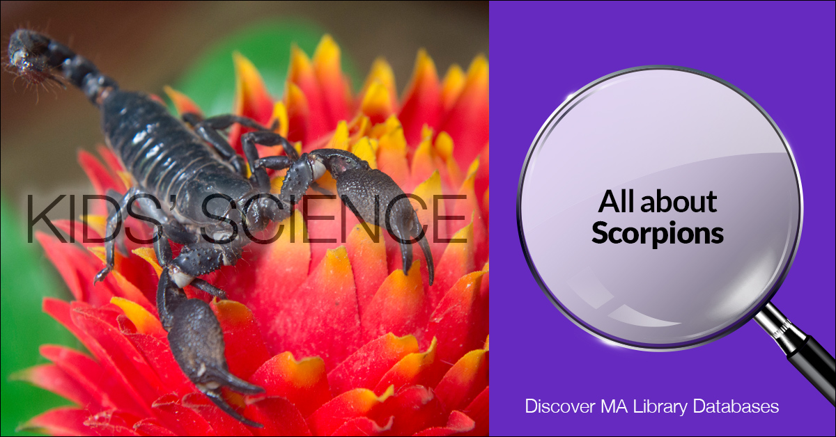 Scorpion on Red Flower with Kid Science Trademark and Microscope Next to It Saying All About Scorpions